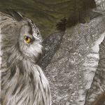 Ascendant – Great Horned Owl