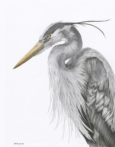 Impasse – Blue Heron