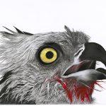 Rapture – Osprey