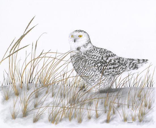 Reverie – Snow Owl